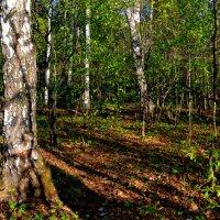 В майском лесу :: Татьяна Лютаева