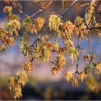 Весна в разгаре. :: Александр Шимохин