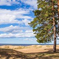 Финский залив :: юрий затонов