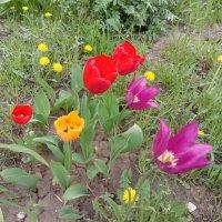 Городские цветы :: Tarka