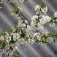 Цветики - цветочки... :: Роман Савоцкий