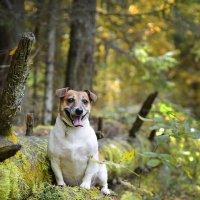 Осень в лесу :: Asya Piskunova