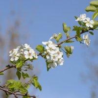 Весна :: Юрий Кирьянов