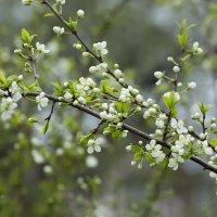 Весна :: Александр Синдерёв