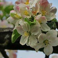 Наш цветущий май :: Liliya Kharlamova