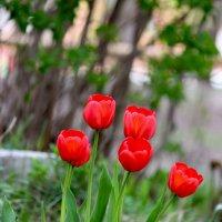 Цветы к празднику. Поздравляю всех с Днем  Победы! :: Ната Волга