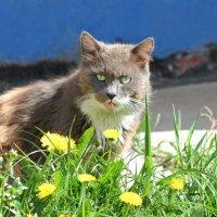 Вышел котик погулять... :: Ната Волга