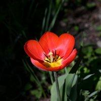 Первый цветок который увидел, :: Анатолий