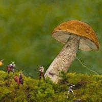 Сражение за гриб. :: Андрей