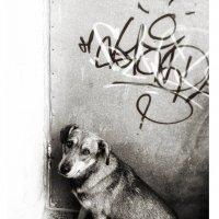 Граффити пёс.. :: Сергей Леонтьев