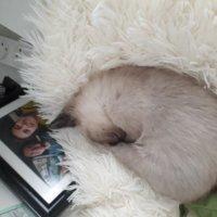 А мне поспать охота! :: Герович Лилия