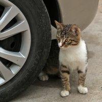 Это моя машина! :: Светлана