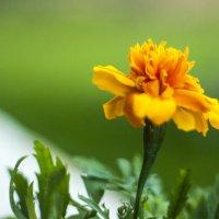 Майский цветок :: Дмитрий Аргунов