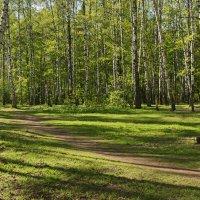 Весенний лес. :: Ирина Нафаня