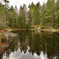 Естественная, нетронутая природа Швеции :: Alm Lana