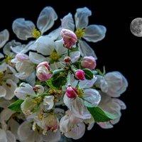 Теплом пронизанный… струящий лунный свет. :: Виктор Малород