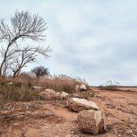 Берег Азовского моря :: Геннадий Шевлюк