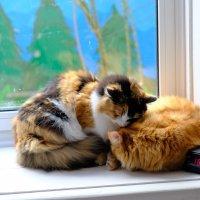 Мама с сыном :: Вадим