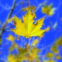 Листья желтые.... :: Ольга (crim41evp)
