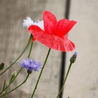 Цветы :: Роман Трофимов