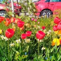 городские цветы :: Андрей Иванов