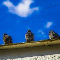 мечта о жар-птице! :: Василий Шестопалов