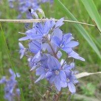 цветок :: Виктор Новиков
