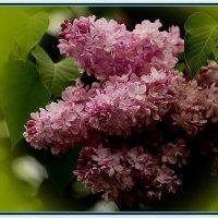 Прощальная весенняя краса... :: Petr Vinogradov