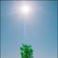 А каким Солнцу быть,если не белым... :: Ахмед Овезмухаммедов