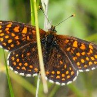 и опять про бабочек..17 :: Александр Прокудин