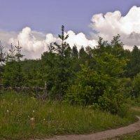 Майский пейзаж :: Ольга Винницкая (Olenka)