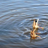 Синхронное плавание :: Надежда