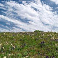 На цветущих холмах.. :: Андрей Заломленков