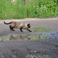 Через лужу :: Ирина Мосина
