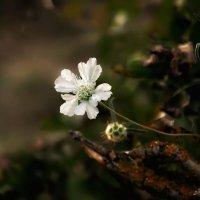 Лесные цветы :: Любовь