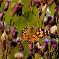 и опять про бабочек..43 :: Александр Прокудин