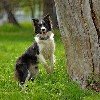 Я, собака, но я - зайка! :: Владимир Куликов
