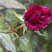 Дождь прошёл :: Валентин Семчишин