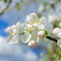 spring :: Nara Nakhshkarian
