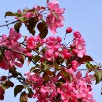цветение :: linnud