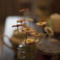 Маргаритки на столе :: Дмитрий Аргунов