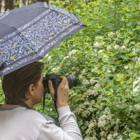 Прогулки во время дождя :: Евгений Мухин