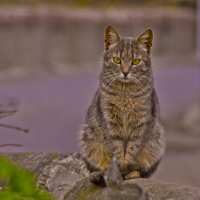 Весенние думы кота :: Ольга Винницкая (Olenka)