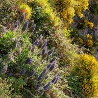 Цветущие скалы острова Мадейры :: Анастасия Богатова