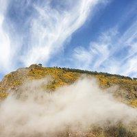 Остров Мадейра.Цветущий ракитник в облаках. :: Анастасия Богатова