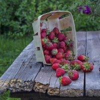 Вечерний  урожай :: Валерий Хинаки