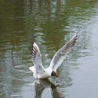 Вот какие у меня большие крылья..... :: Анна Приходько
