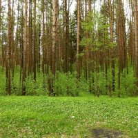 Опушка леса. :: веселов михаил