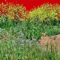 Трава у забора :: Nina Karyuk