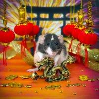 Китайский Новый Год! Год Крысы! :: Татьяна Попова